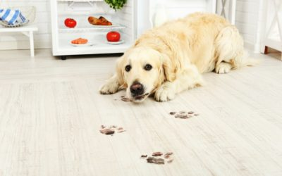 4 Top Tips for Floor Cleaning – Get it Right First Time